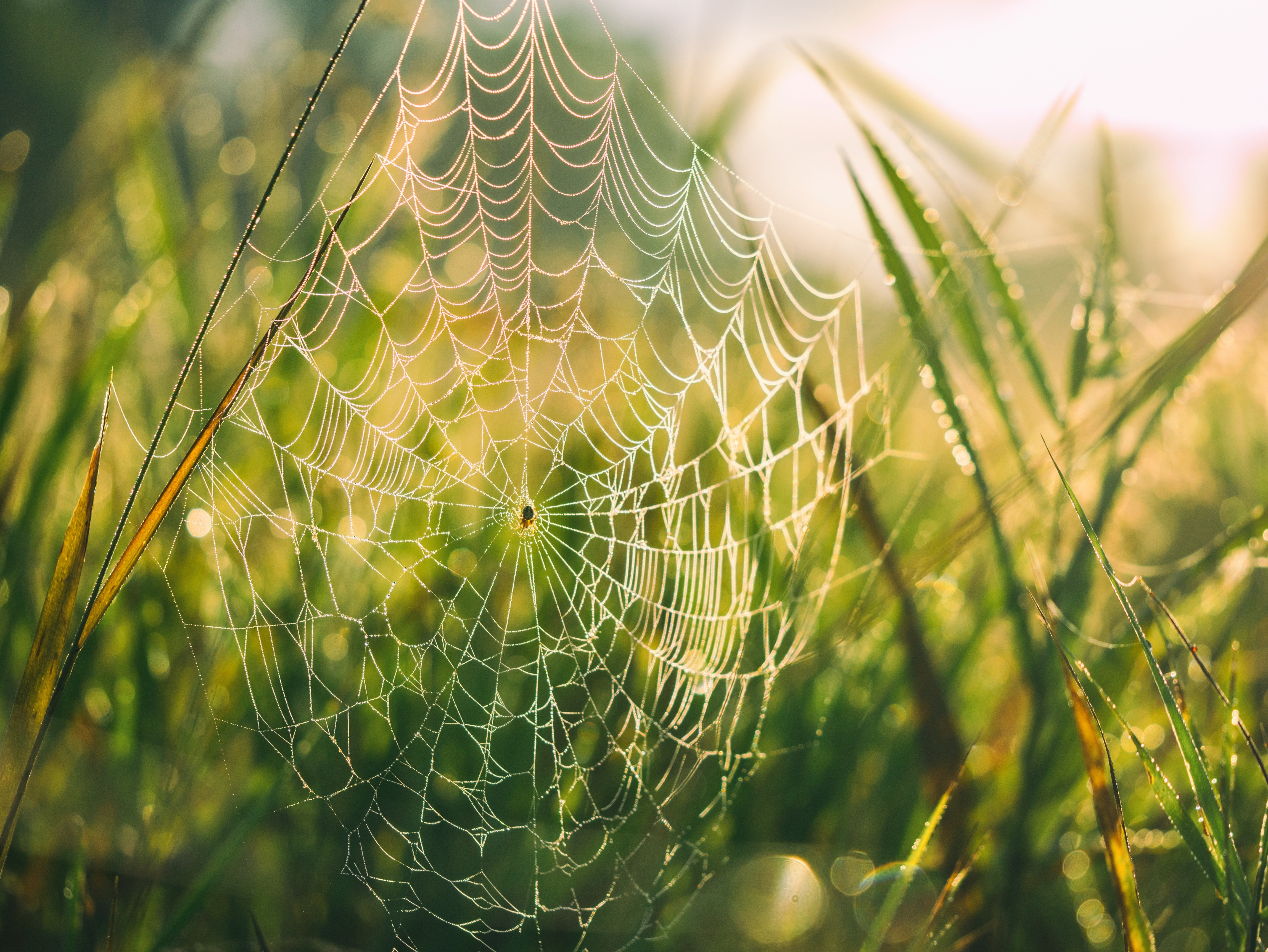 God's Greatness in Spider
